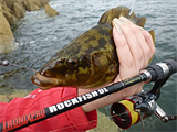 LRF - Light Rock Fishing