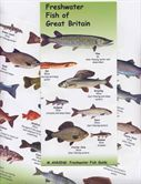 Freshwater Fish Of Great Britain Chart