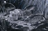 Planet Prints Carp Art - Midnight Feast