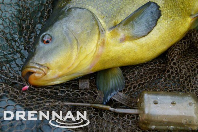 Drennan Bolt Rig Feeders